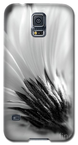 Soft Gerbera Galaxy S5 Case