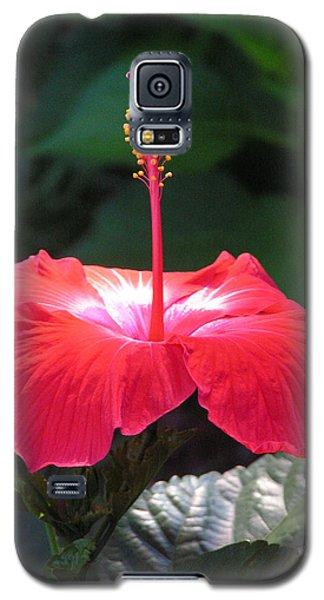 Soft Light Galaxy S5 Case by Deborah Hughes