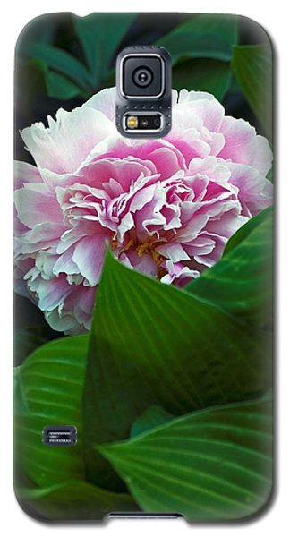 Galaxy S5 Case featuring the photograph Soft Pink by Elsa Marie Santoro