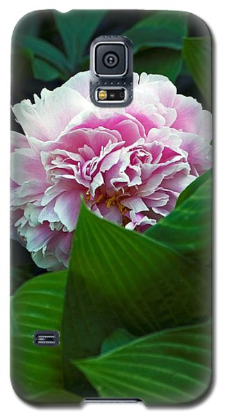 Soft Pink Galaxy S5 Case