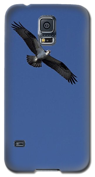 Galaxy S5 Case featuring the photograph Sounding The Alarm by Anne Rodkin