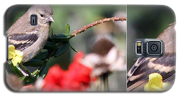 Galaxy S5 Case featuring the photograph Sparrow With Detail by Mark J Seefeldt