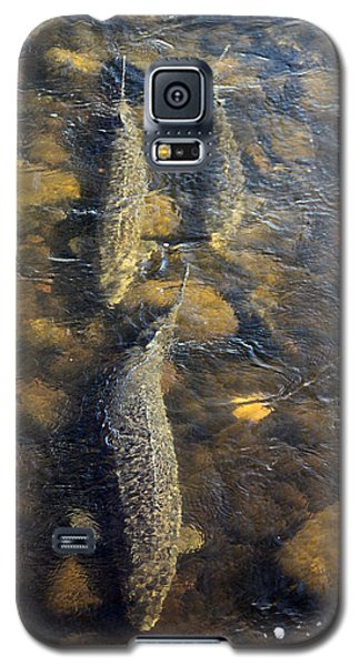 Spawning Sturgeon Trio Galaxy S5 Case