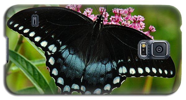 Spicebush Swallowtail Din038 Galaxy S5 Case