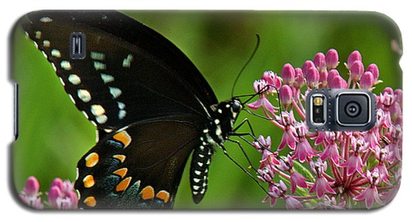 Spicebush Swallowtail Din039 Galaxy S5 Case