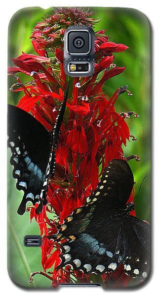 Spicebush Swallowtails Visiting Cardinal Lobelia Din041 Galaxy S5 Case