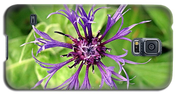 Galaxy S5 Case featuring the photograph Spider Flower by Nick Kloepping