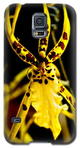 Spider Orchid Galaxy S5 Case by Barbara Middleton