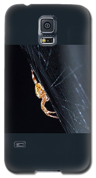 Galaxy S5 Case featuring the photograph Spider Solitaire by Chris Anderson