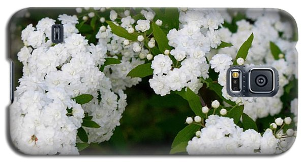 Galaxy S5 Case featuring the photograph Spirea Blooms by Maria Urso