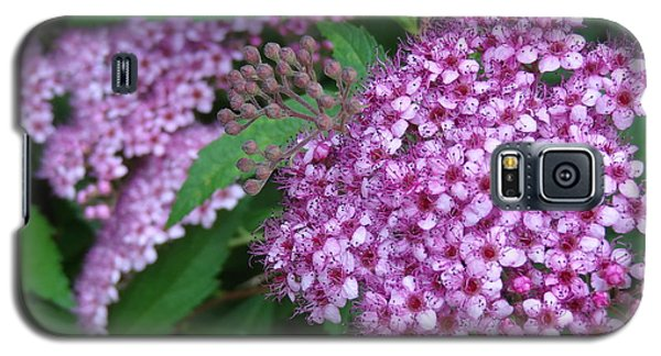 Spirea Galaxy S5 Case