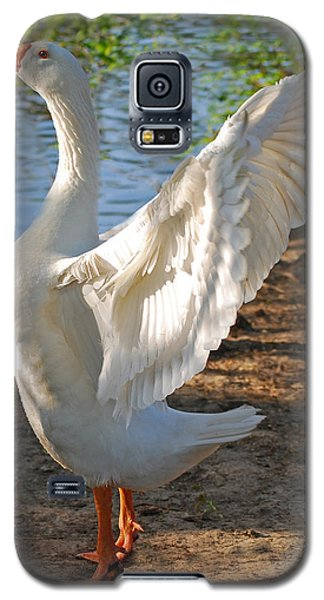 Spread Your Wings Galaxy S5 Case by Lisa Phillips