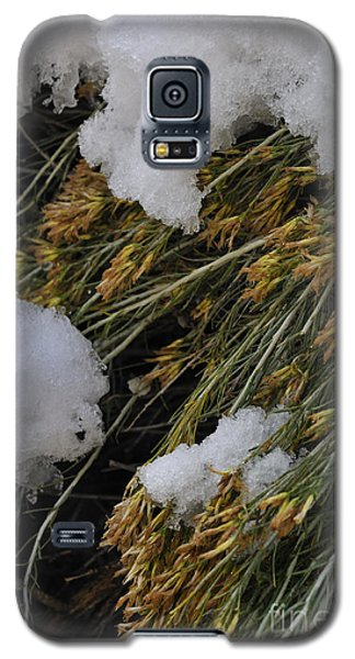 Spring Arrives Galaxy S5 Case