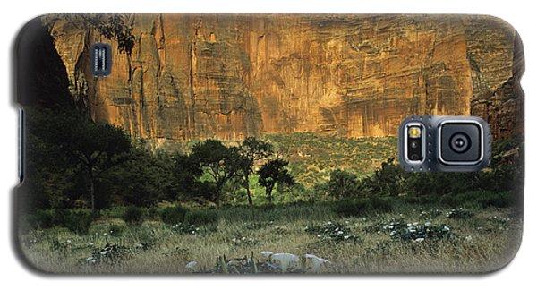 Spring At Big Bend Galaxy S5 Case