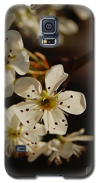 Spring Blossoms I Galaxy S5 Case