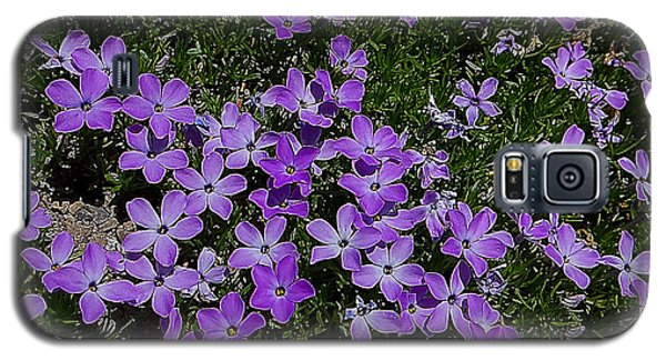 Galaxy S5 Case featuring the photograph Spreading Flox Wildlfower by Blair Wainman