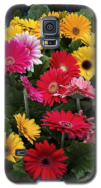 Spring Colors Galaxy S5 Case