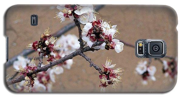 Spring Promises Galaxy S5 Case