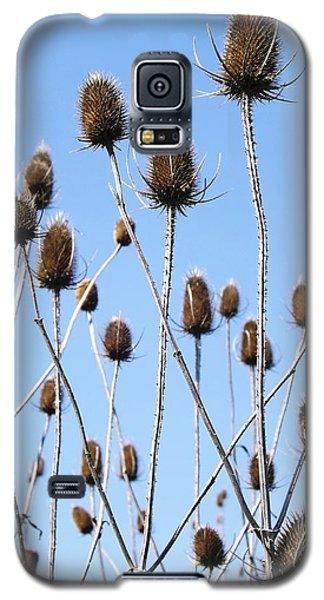 Spring Weeds 2 Galaxy S5 Case by Gerald Strine