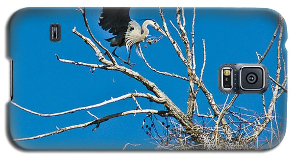 Springtime Nesting In Colorado Galaxy S5 Case
