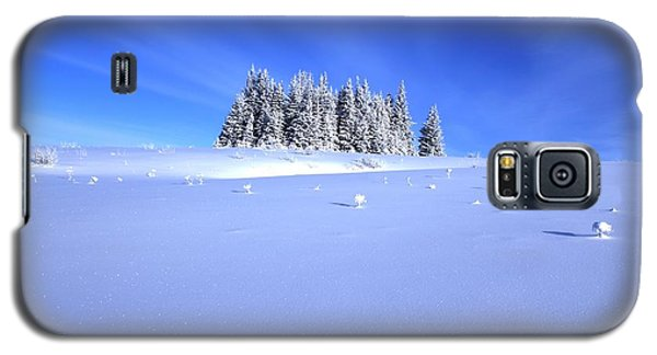 Galaxy S5 Case featuring the photograph Spruce Grove In Winter by Michele Cornelius