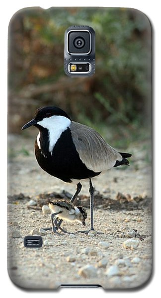 Spur-winged Plover And Chick Galaxy S5 Case