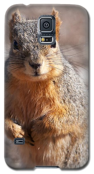 Galaxy S5 Case featuring the photograph Squirrel by Art Whitton