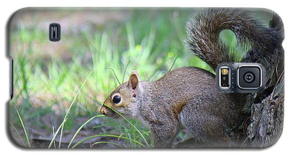 Galaxy S5 Case featuring the photograph Squirrel Hiding In The Grass by Roena King