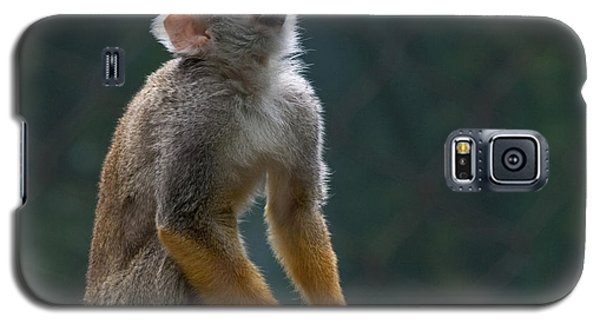 Squirrel Monkey Galaxy S5 Case by Cindy Haggerty