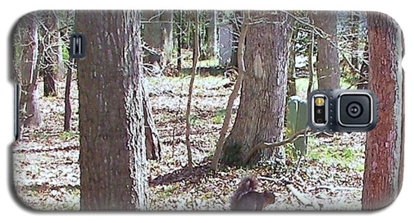 Galaxy S5 Case featuring the photograph Squirrel Waiting by Pamela Hyde Wilson