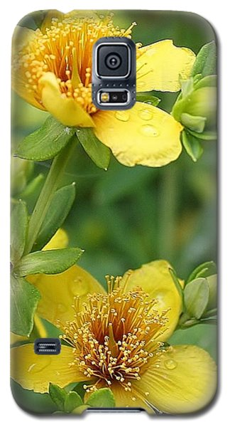 Galaxy S5 Case featuring the photograph St John's-wort by Bruce Bley