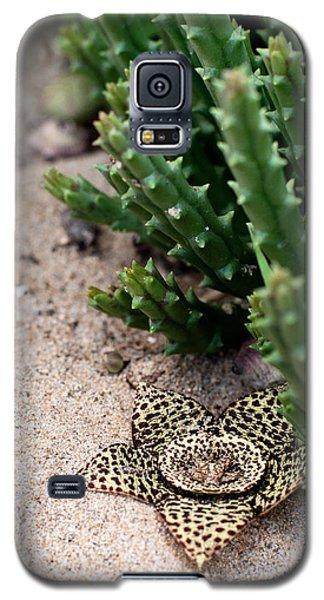 Stapelia Variegata Galaxy S5 Case by Laura Melis