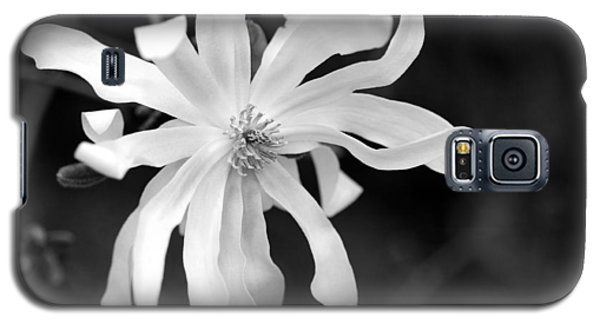 Star Magnolia Galaxy S5 Case by Lisa Phillips