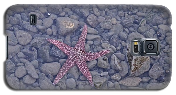 Starfish Galaxy S5 Case