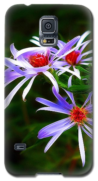 Stars Of Spring Galaxy S5 Case by Judi Bagwell