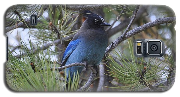 Stellar's Jay In Profile Galaxy S5 Case