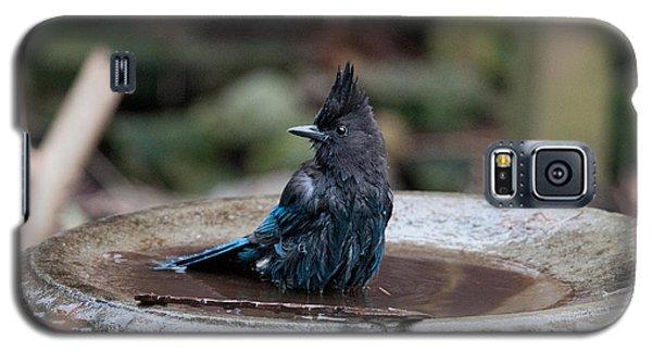 Galaxy S5 Case featuring the digital art Steller Jay In The Birdbath by Carol Ailles