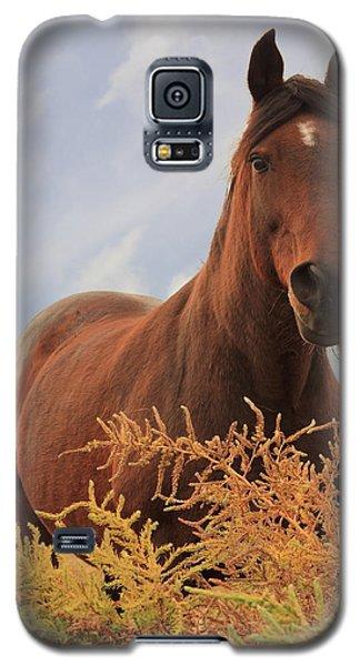 Stormy Galaxy S5 Case by Jim Sauchyn