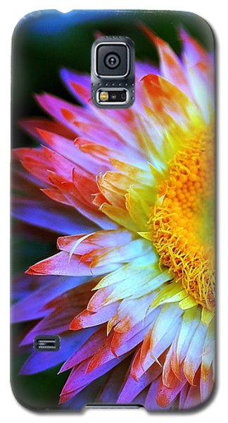 Galaxy S5 Case featuring the photograph Strawflower by Judi Bagwell