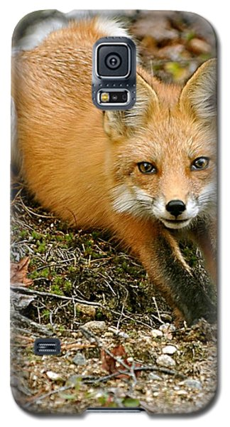 Stretching Fox Galaxy S5 Case
