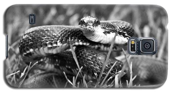 Brown Snake Galaxy S5 Case - Strike by Betsy Knapp