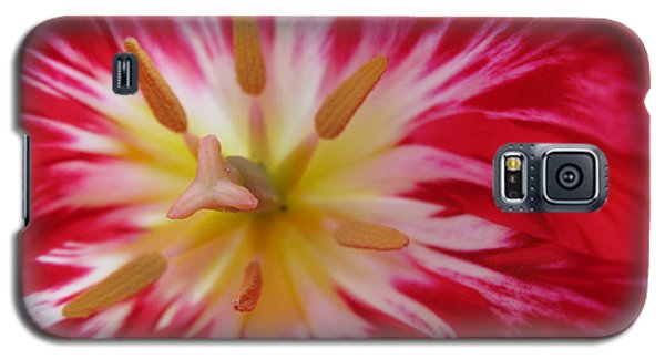 Striped Flaming Tulips. Hot Pink Rio Carnival Galaxy S5 Case by Ausra Huntington nee Paulauskaite