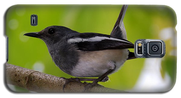 Galaxy S5 Case featuring the photograph Study Of A Magpie-robin by Fotosas Photography