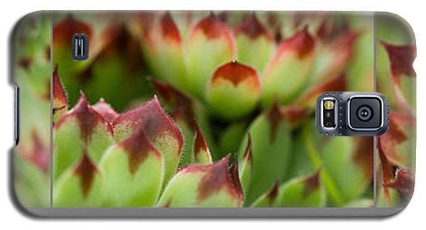 Succulent Galaxy S5 Case by Trevor Chriss