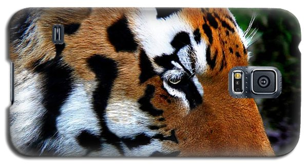 Galaxy S5 Case featuring the photograph Sumatran Strength by Davandra Cribbie