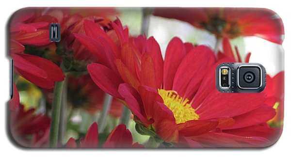 Summer Day Galaxy S5 Case