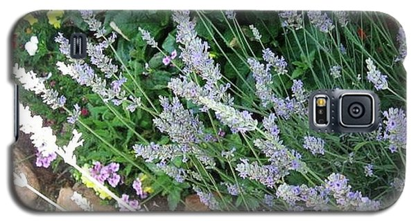 Summer Lavender Galaxy S5 Case
