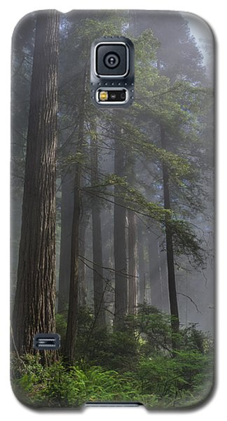 Sun Breaking On Redwoods Galaxy S5 Case by Greg Nyquist