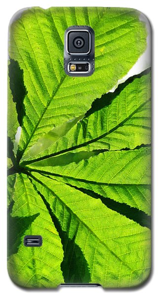 Galaxy S5 Case featuring the photograph Sun On A Horse Chestnut Leaf by Steve Taylor