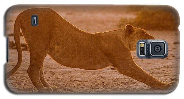 Sun Stretch Galaxy S5 Case